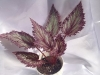 DS Птица говорун 2 (2) — копия