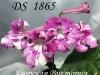 DS 1865