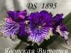 DS 1895