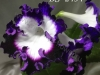 DS 2434 цветок