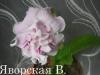 DS-Roksalana-