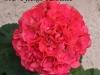 ИВ Русское Раздолье цветок