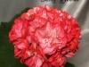 Song gyeoul цветок