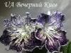 UA Вечерний Киев