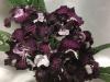UA Трембита цветение