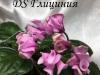 DS Глициния